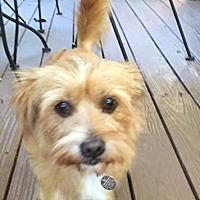 Adopt A Pet :: Cooper - Atlanta, GA