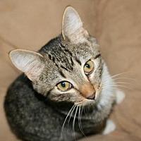 Adopt A Pet :: Kevin - Estherville, IA