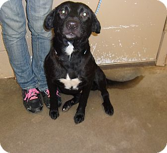 Labrador Retriever Mix Dog for adoption in Jacksonville, Texas - Maura