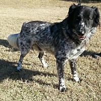 Adopt A Pet :: Boomer - Jefferson, TX
