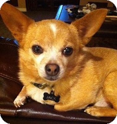Mesa Arizona Dog Adoption