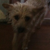Adopt A Pet :: Abbigail - Visalia, CA