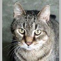 Adopt A Pet :: Toby - Pittsboro, NC