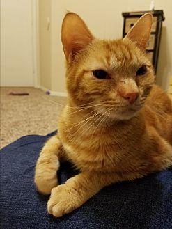 Adopt A Pet :: Fedora  - Dallas, TX