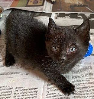 Adopt A Pet :: Hope  - Dumfries, VA