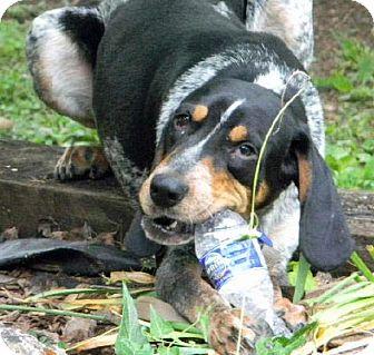 Dog Rescue Dallas Tx