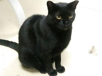 Adopt A Pet :: GABRIELLE..THRIVES ON LOVE  - Ft Myers Beach, FL