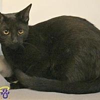 Adopt A Pet :: Sarah - Sebastian, FL