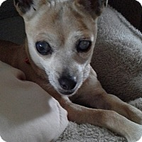 Adopt A Pet :: Wendy: Pending! (PA) - Madison, WI