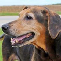 Adopt A Pet :: Angel - LaHarpe, KS