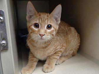 Adopt A Pet :: Stray/Hold  - Laramie, WY
