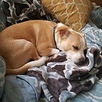 Adopt A Pet :: Roxy - Whitestone, NY
