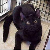 Adopt A Pet :: Castaway - Deerfield Beach, FL