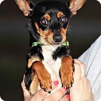 Adopt A Pet :: Rhett - Starkville, MS