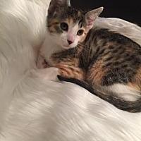 Adopt A Pet :: Ava - Santa Fe, TX