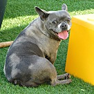 Adopt A Pet :: Burberry