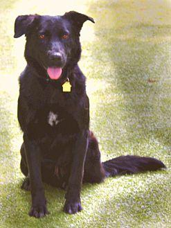 Adopt A Pet :: Grayson  - Germantown, TN