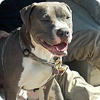 Adopt A Pet :: Pudge - Irving, TX