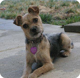 Sacramento Ca Chihuahua Meet Tommy A Pet For Adoption