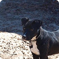 Adopt A Pet :: Aspen - La Crosse, WI