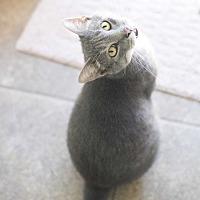 Adopt A Pet :: Smokey - Houston, TX
