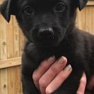 Adopt A Pet :: Baby Sorbet