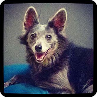 Spitz (Unknown Type, Small) Mix Dog for adoption in Grand Bay, Alabama - Sierra