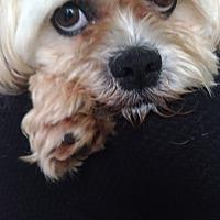 Adopt A Pet :: FRANKLIN - Toronto/GTA, ON