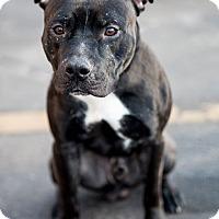 Adopt A Pet :: Captain - La Crosse, WI