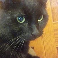 Adopt A Pet :: Jackson - South Saint Paul, MN
