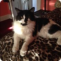Adopt A Pet :: Bastian_Courtesy Post - Columbia, MD