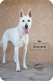 German Shepherd Dog Mix Dog for adoption in Newport Beach, California - Athena