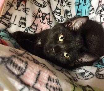 Adopt A Pet :: BINX  - Northwood, NH