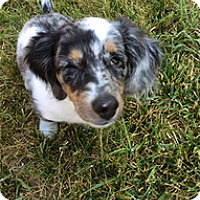 Adopt A Pet :: Magpie - Madison, WI