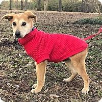 Adopt A Pet :: Arrow - Starkville, MS