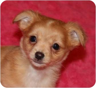 Plainfield Dog Adoption