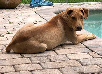 Adopt A Pet :: Heart of Gold.....  - Ft Myers Beach, FL