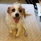 Adopt A Pet :: Cee Cee