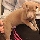 Adopt A Pet :: Titon Moon