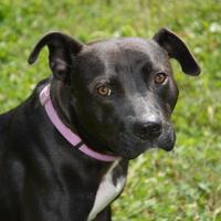 Adopt A Pet :: Pat - Valley View, OH