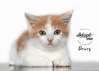 Adopt A Pet :: Dewey  - Houston, TX