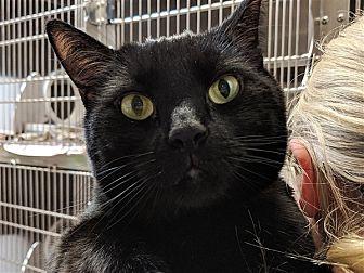 Adopt A Pet :: Barn Buddy: Binx  - Edmonton, AB