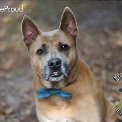 Chow Chow Puppies For Sale In Boynton Beach Florida Adoptapet Com