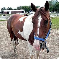 Adopt A Pet :: Sonny - Woodstock, IL