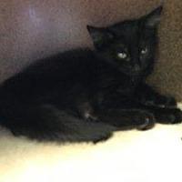Adopt A Pet :: Flurry - Hudson, NY