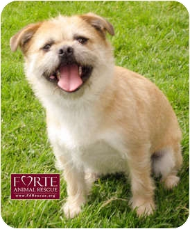 Marina Del Rey Dog Adoption