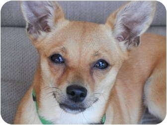 San Marcos Dog Adoption