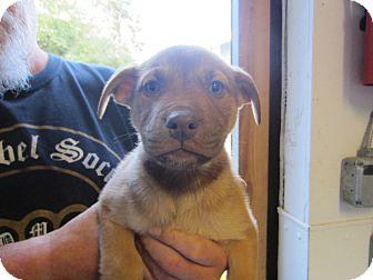 Tillamook Or Bernese Mountain Dog Meet Female Puppy 3 A Pet For