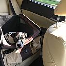 Adopt A Pet :: Monte