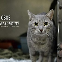 Adopt A Pet :: OBOE - Johnstown, PA